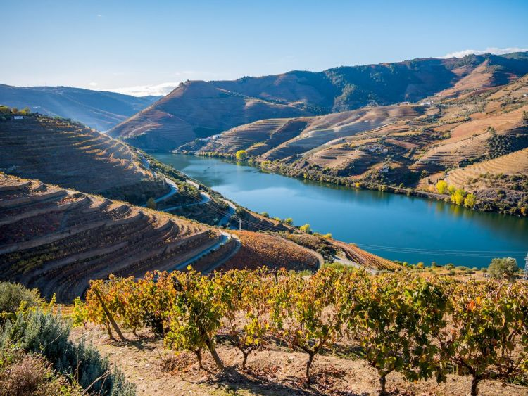 Douro-river-and-vineyards-in-Portugal