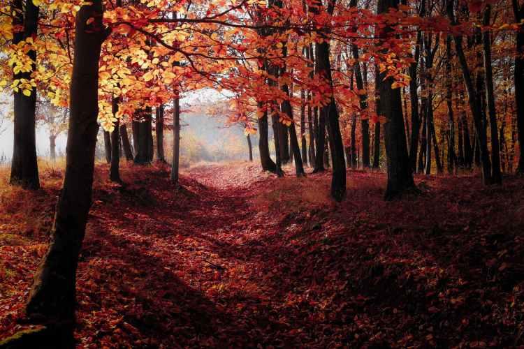 autumn backlit dawn environment