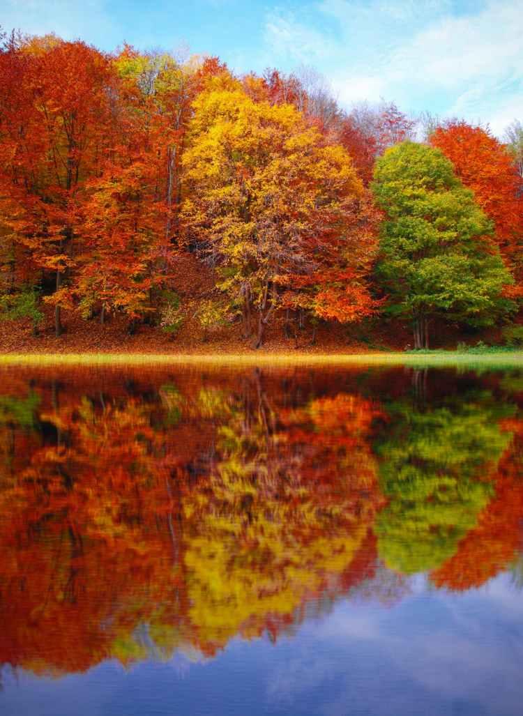 art artwork autumn autumn leaves