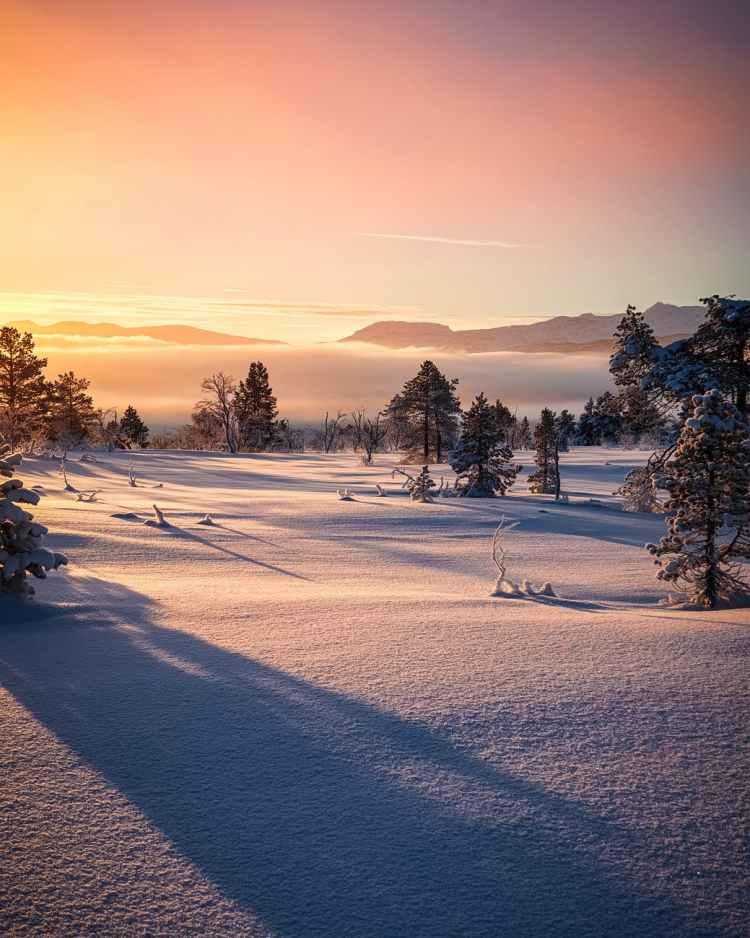 snowy field near trees under golden hour