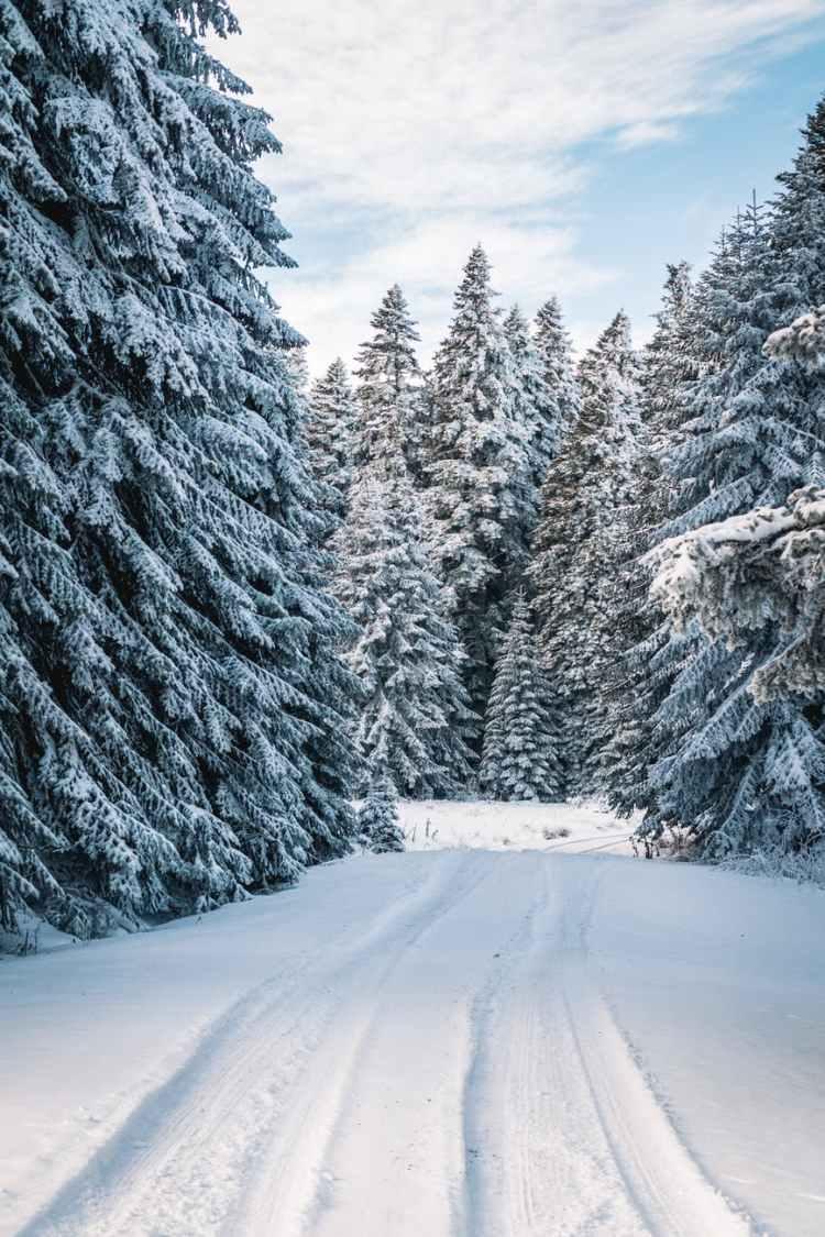 photo of snow field near trees