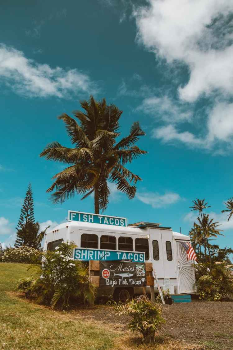 white and blue bus near green palm tree under blue sky