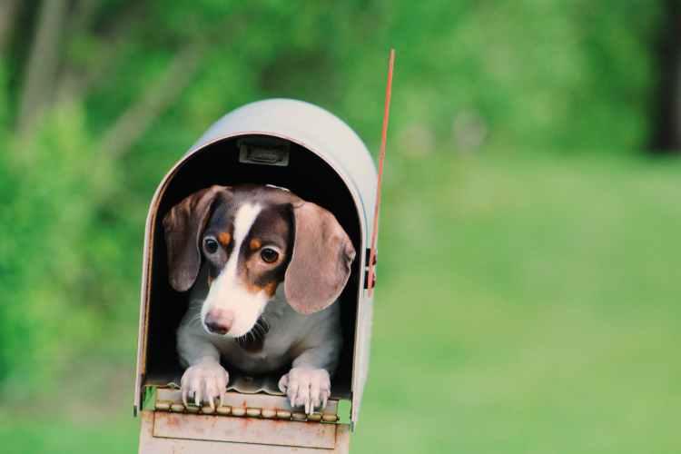 photo of dog inside mailbox