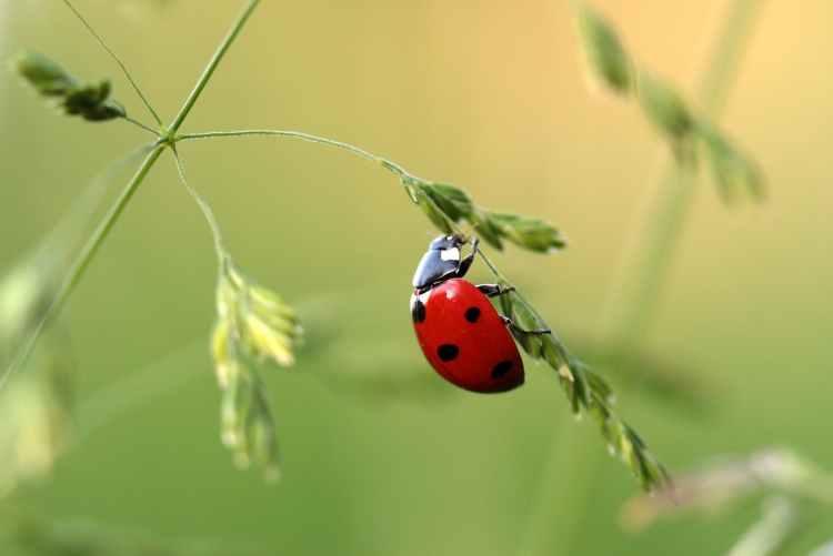close up photo of ladybug on leaf during daytime