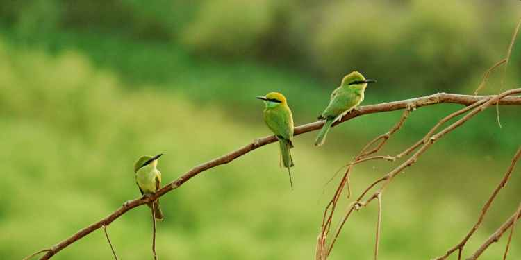 three long beaked small birds perched on brown tree branch
