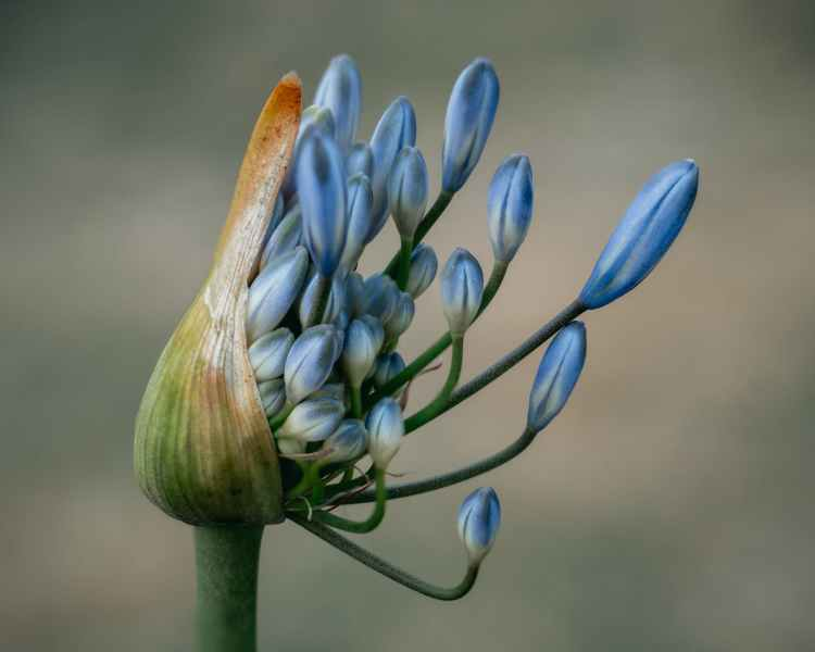 close up photo of blue flower