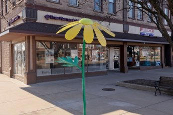 The eye-popping Green-Headed Coneflower greets passersby on North Main Street in Wadsworth.