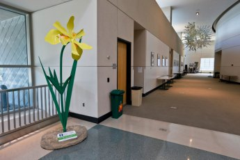 Visitors to the Akron-Summit County Library are greeted by a beautiful Yellow Flag Iris.