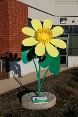 The Lesser Celandine sculpture blooms outside the City of Green YMCA