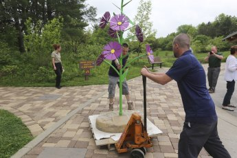 This New England Aster was the last flower sculpture to be installed. It greets visitors at the F.A. Seiberling Nature Realm.