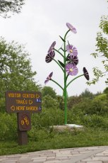 At 8 ft, 3 in, this New England Aster stands tall at the Summit County Metro Parks' Nature Realm.