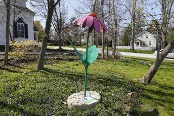 Purple Coneflower in Peninsula