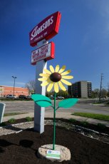 This 8 ft.-3 in., Common Sunflower sculpture stands tall at the Swensons at 40 S. Hawkins St. in Akron.