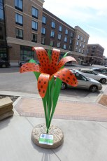 Our colorful Tiger Lily  sculpture stands tall at nearly 8 ft. in downtown Kent.
