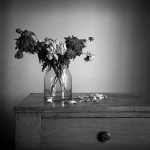 © Julie McLeod
