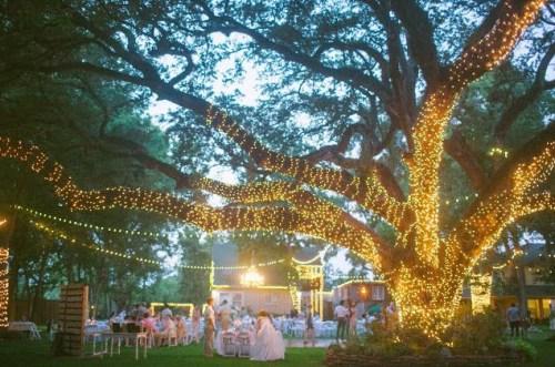 lighted tree weddingfor1000.com