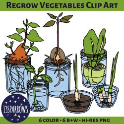 regrow vegetables clip art tpt preview