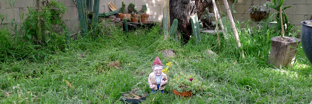 Gnome Chomsky, the garden Noam