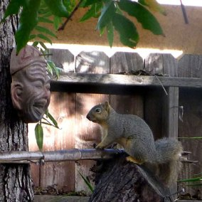 Squirrel Faceoff