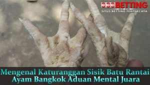 Mengenal-Katuranggan-Sisik-Batu-Rantai-Ayam-Bangkok-Aduan-Mental-Juara