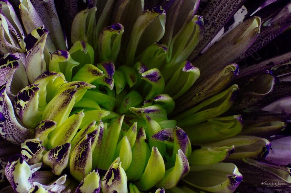 macro, flower, stacked