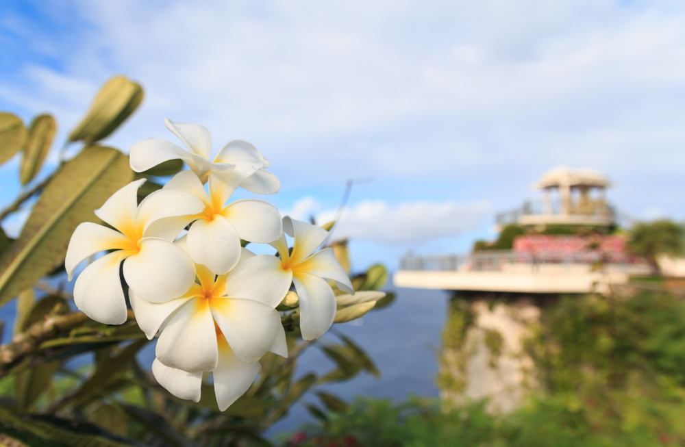 White and yellow Plumeria blooming at Two Lovers Point in Guam (Shutterstock)