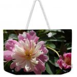 Photo pf a pink and white dahlia on a weekender tote bag Nancy's Novelty Photos on Pixels Products for You
