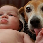 Dogs Who Love Their Human Babies Like Their Own One Green Planet