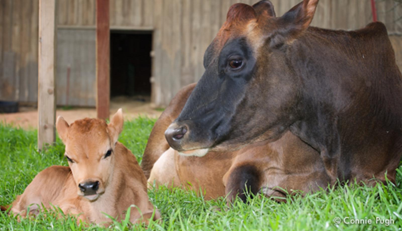 6 Amazing Ways Farm Animal Moms Show Love For Their Babies