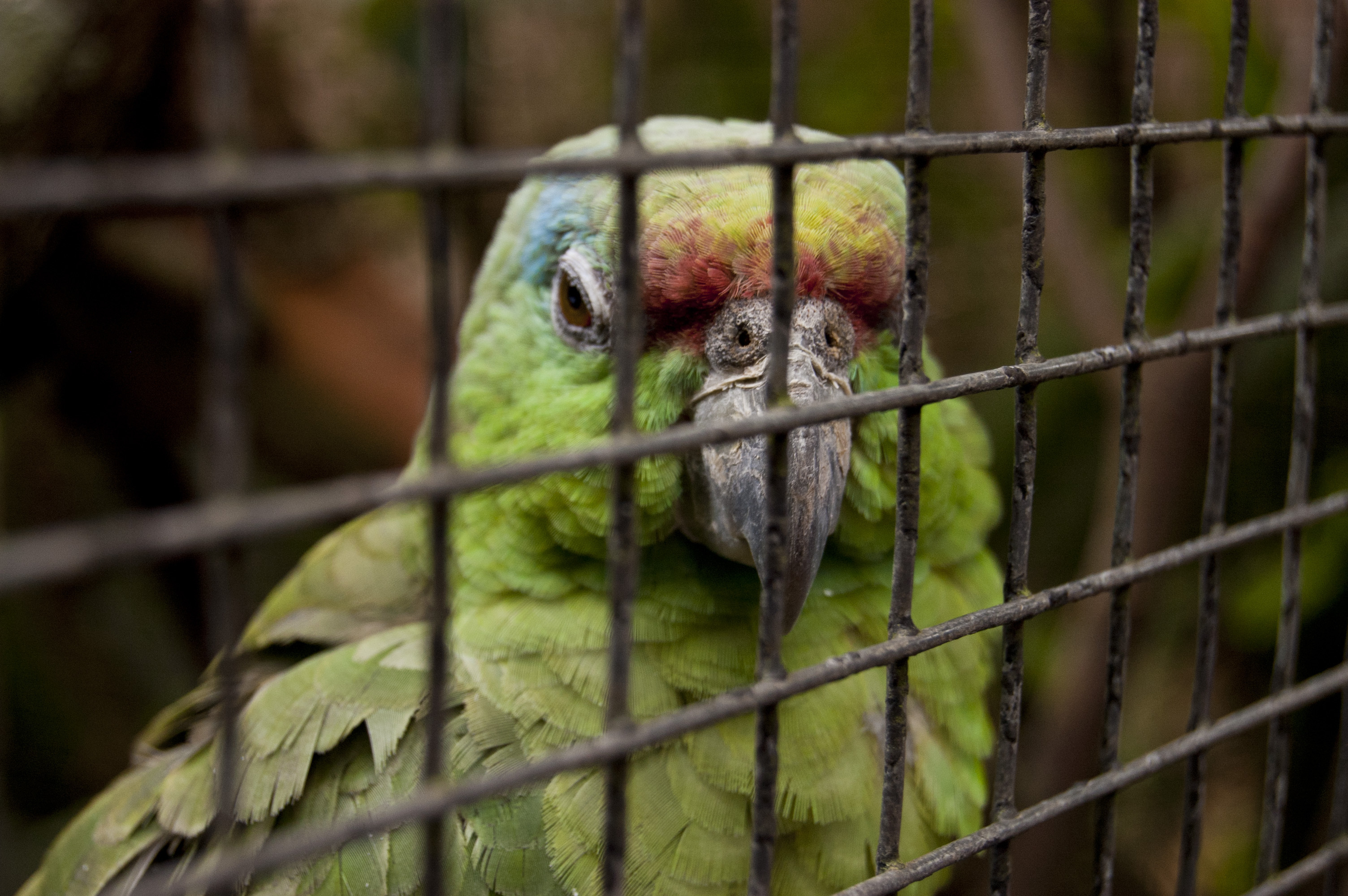 Petition: Find Wildlife Traffickers Who Tossed Exotic Animals Into the Sea to Their Death