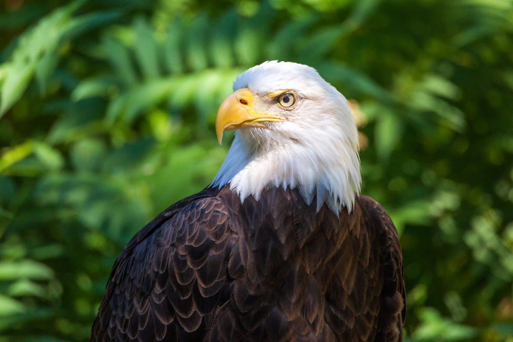 Authorities are Searching for Person Who Illegally Shot a Protected Bald Eagle in Oregon!