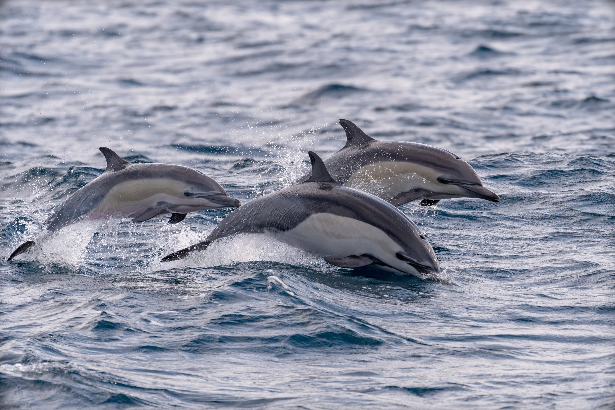 Dolphins Found with Gunshot Wounds in Florida