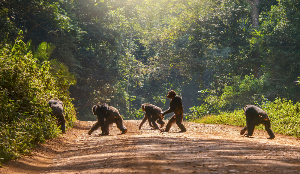 Wild Animals Such as Chimpanzees and Honeybees Also Practice Social Distancing to Prevent the Spread of Disease