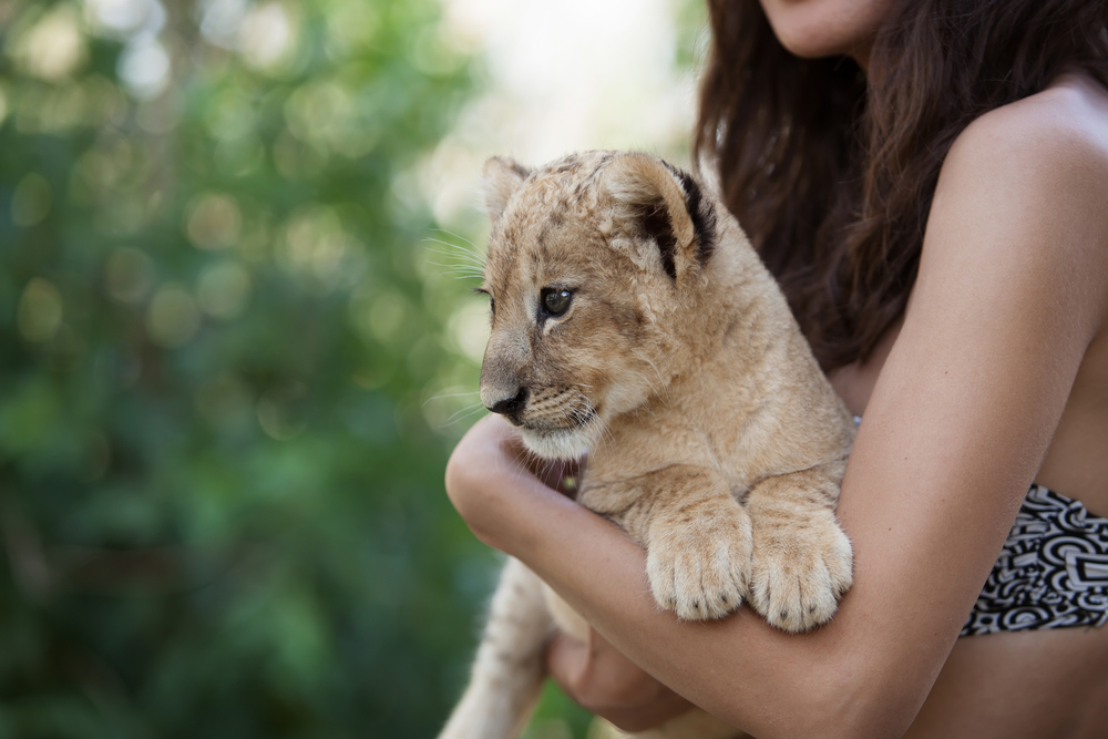 """Petition: Model Arrested for Illegally Living with """"Pet"""" Lion Cub and Python"""