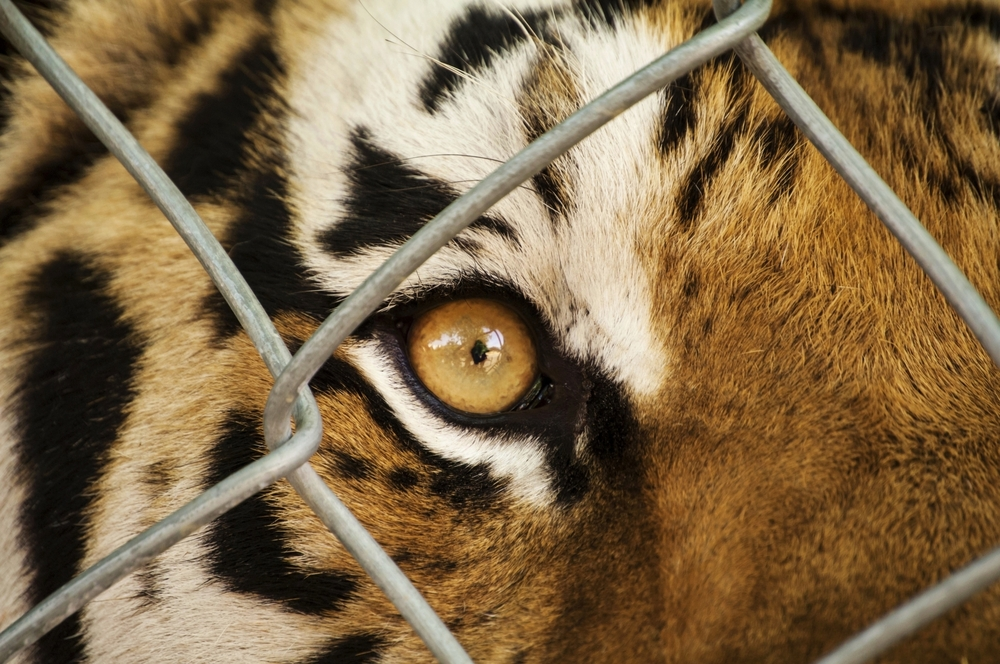 Petition: Why You Shouldn't Support Joe Exotic, the Star of Tiger King