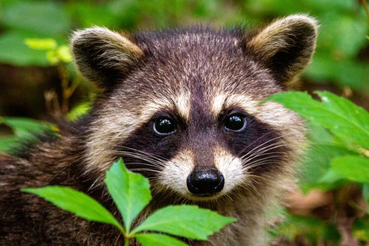 South Dakota Bounty Program Kills 134,000 Animals in Three Years