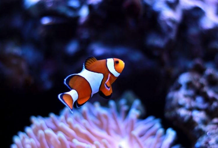 Protecting Reef Wildlife by Stopping the Aquarium Trade