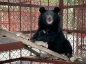 Bear Cub 'Wonder' Rescued From Illegal Traffickers
