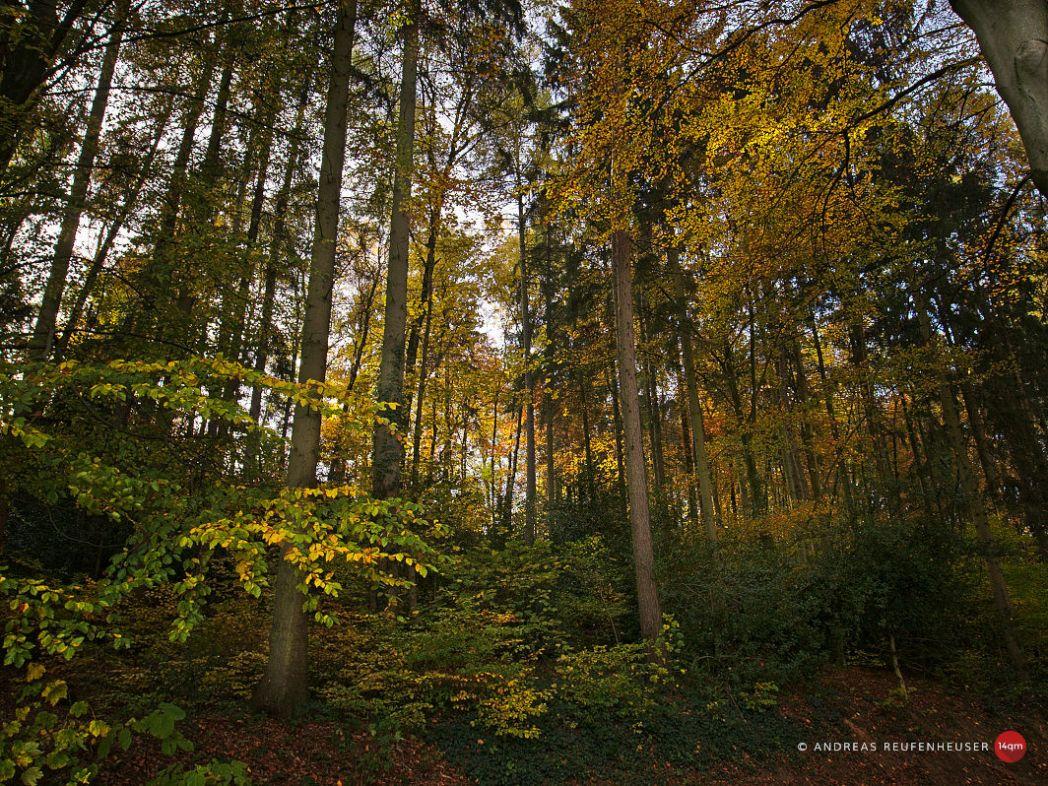 Herbstlicht an der Wupper