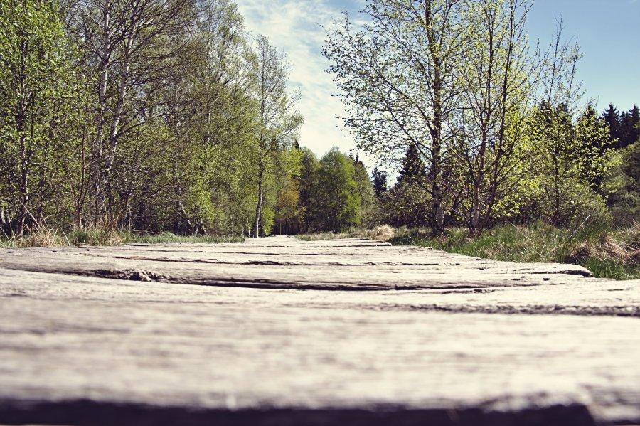Bohlenweg schwarzes Moor