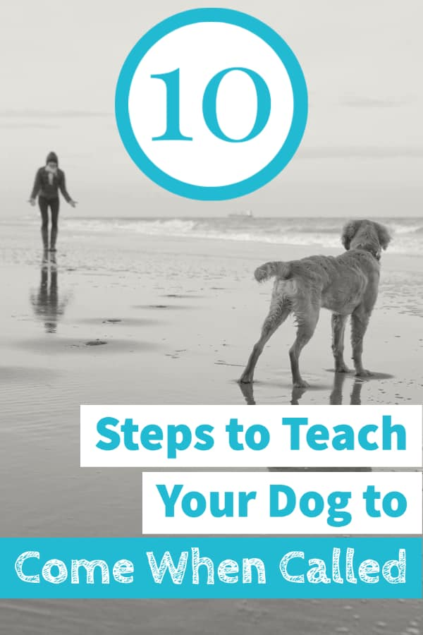 10 Steps to Teach Your Dog to Come When Called