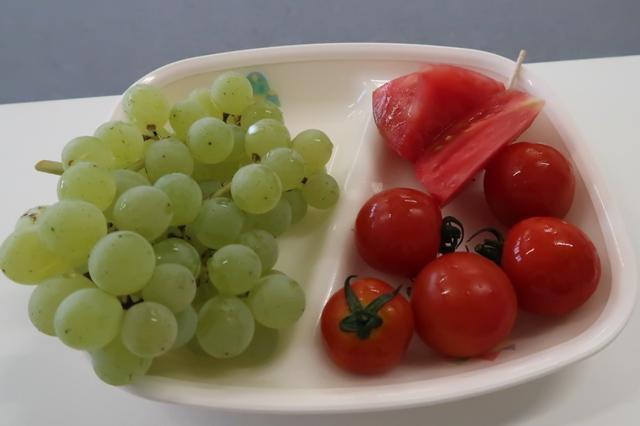 収穫されたトマトをごちそうになりました。ブドウは近隣のブドウ栽培農家から。