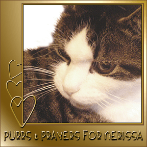 Purrs+and+Prayers+for+Nerissa