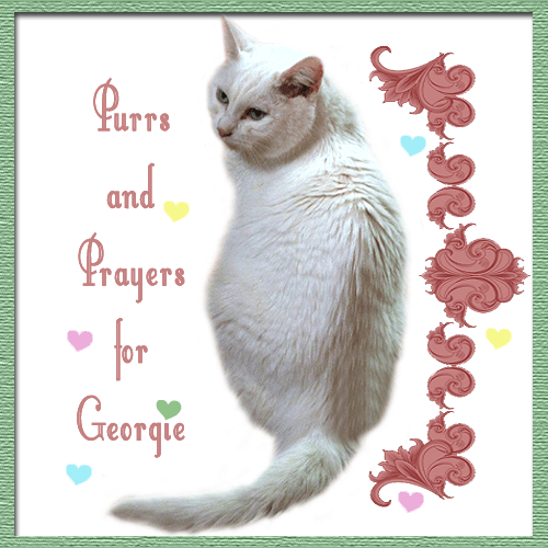 Purrs and Prayers for Georgie