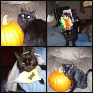 black cat collage