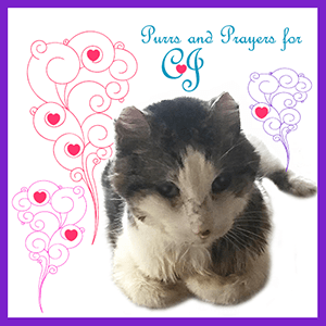 Purrs and Prayers for CJ Badge