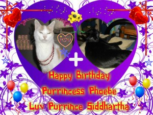 Bday card fur Phoebe