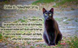 National-Feral-Cat3