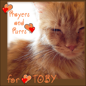 purrs-n-prayers-for-toby