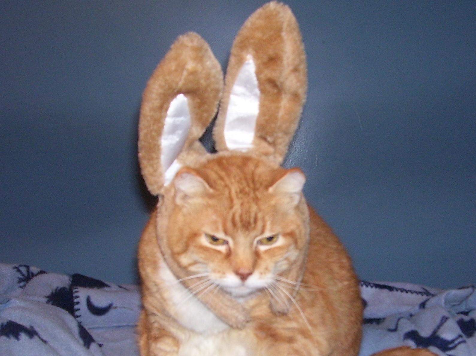 Catburry Bunny